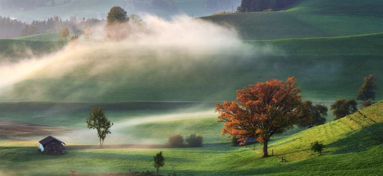 Caressed by mist - Pohlazen mlhou