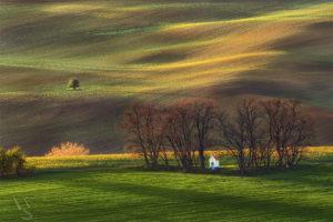 Contemplation in the fields --- Rozjímání v polích